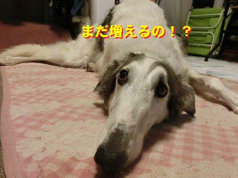 e_20141129104835d06.jpg