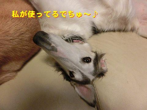 e_2014120900444100e.jpg