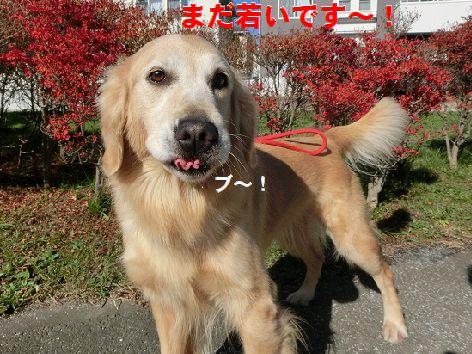 f_2014120610422776b.jpg