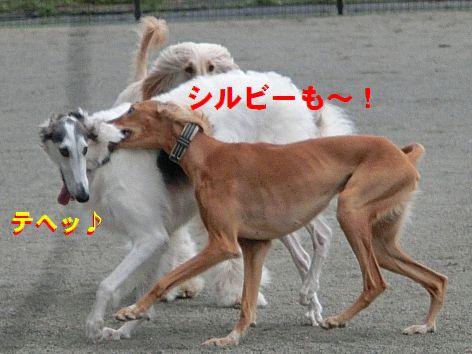 h_20141106212424188.jpg