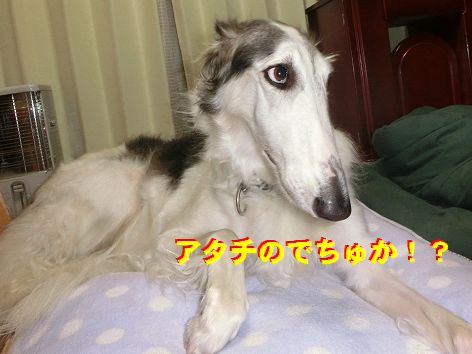 h_20141110004319b62.jpg
