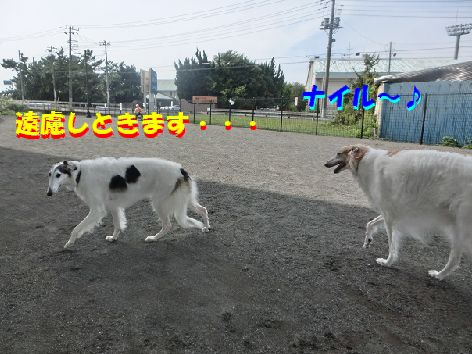 i_201410102230299d2.jpg