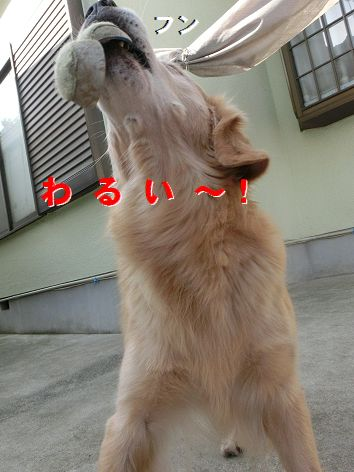 m_20141120221131d7d.jpg