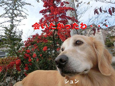q_201411190127024cb.jpg