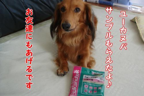 DSC06410_convert_20101013191212.jpg
