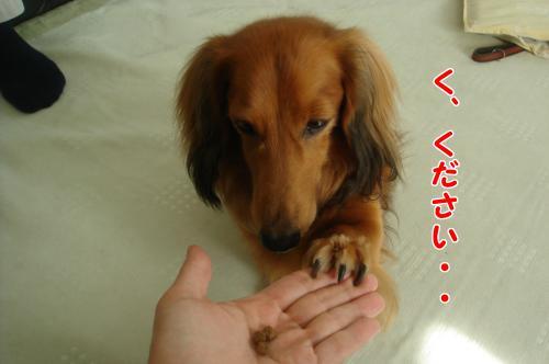DSC06413_convert_20101013191438.jpg