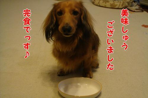 DSC065871_convert_20101025191047.jpg