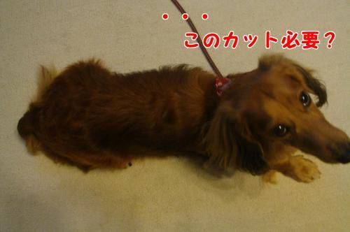 DSC065901_convert_20101025191149.jpg