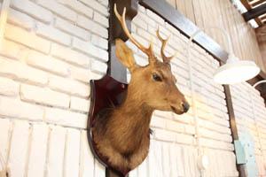 20110825鹿剥製