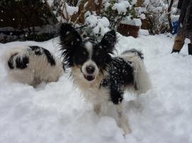 犬たちは雪が大好き!!