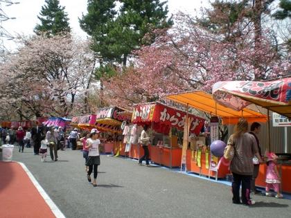松本歯科大桜  (151)