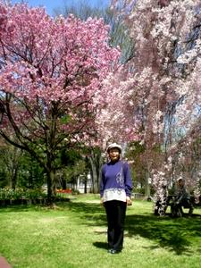 松本歯科大桜  (37)
