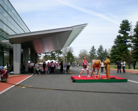 松本歯科大桜  (136)