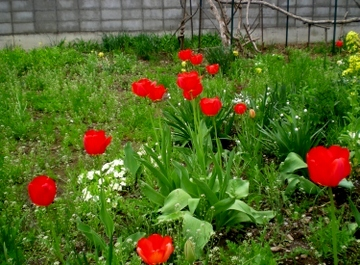 庭の花 (1)