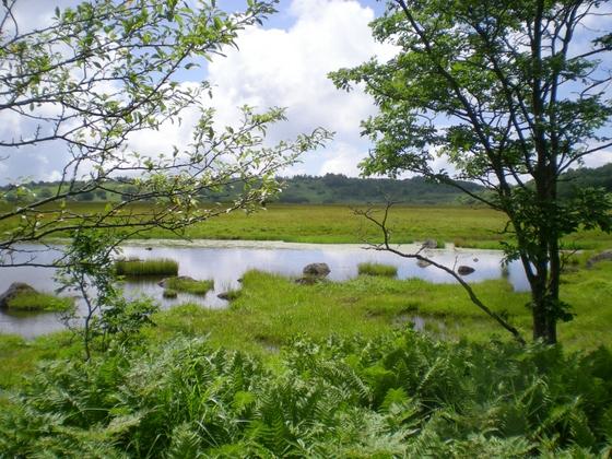 霧ヶ峰・八島湿原 (96)