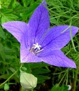 7月の花 (12)
