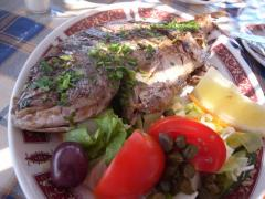 マルタの魚