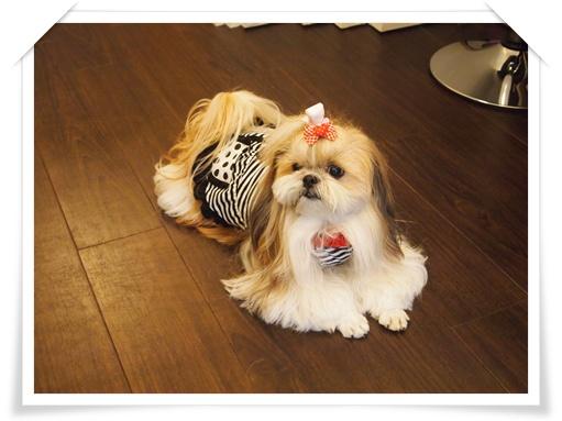 犬-WWW