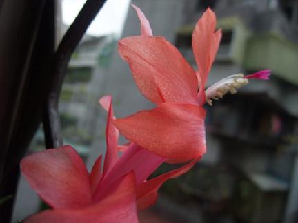 flower-r.jpg