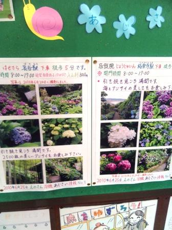 手作り紫陽花情報