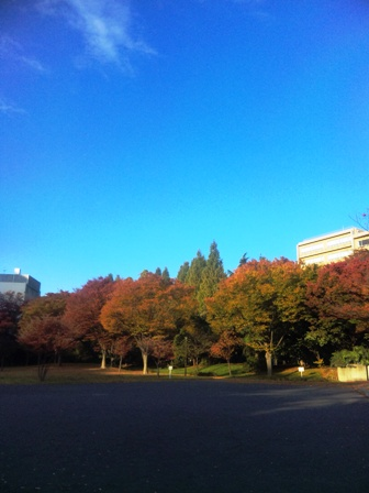 朝ラン_沢渡中央公園