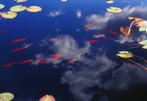 2010.9.26湯川沼11b