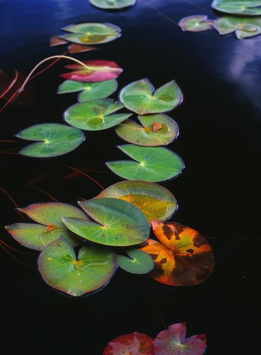 2010.9.26湯川沼07b