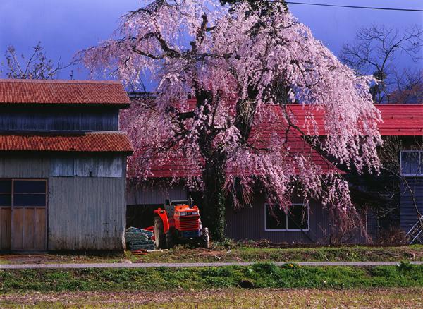 2011.05.08湯沢市横堀01b