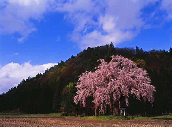 2011.05.08湯沢市おしら様01b