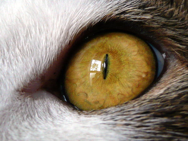 110903_eye.jpg