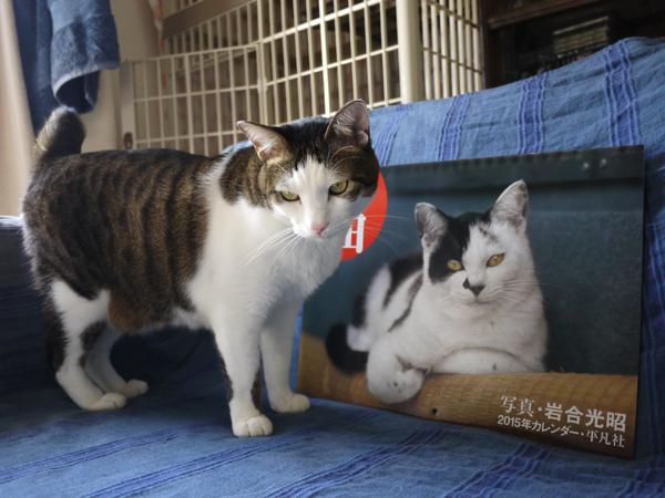 141209_rikimaru2.jpg