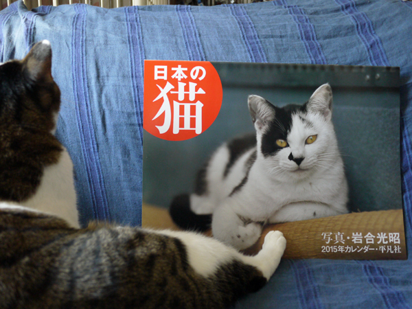 141209_rikimaru4.jpg