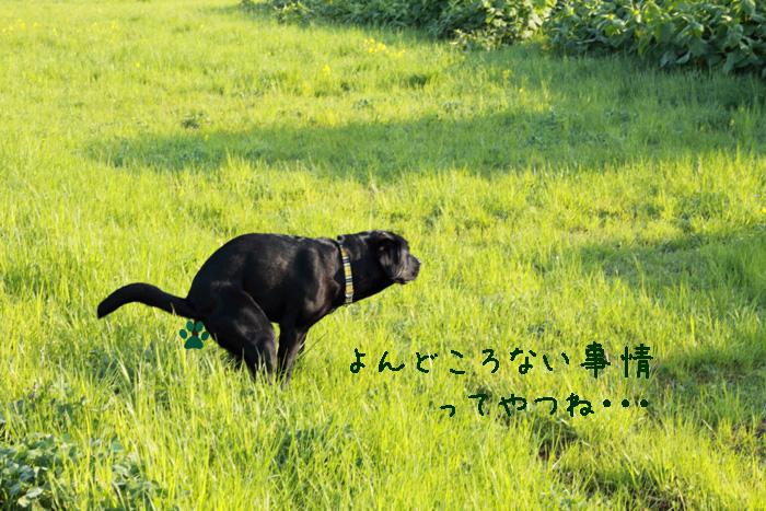 20110526-004.jpg