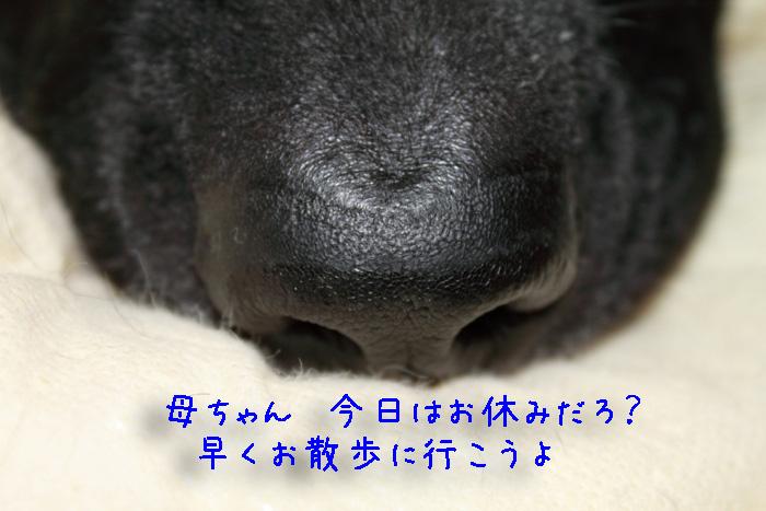 20110611-001.jpg