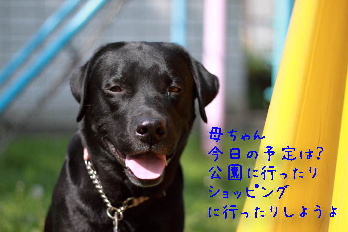 20110611-004.jpg