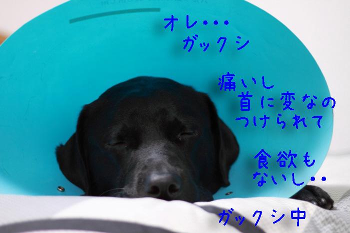 20110611-007.jpg