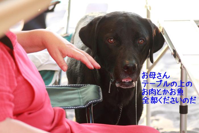 20110813-006.jpg