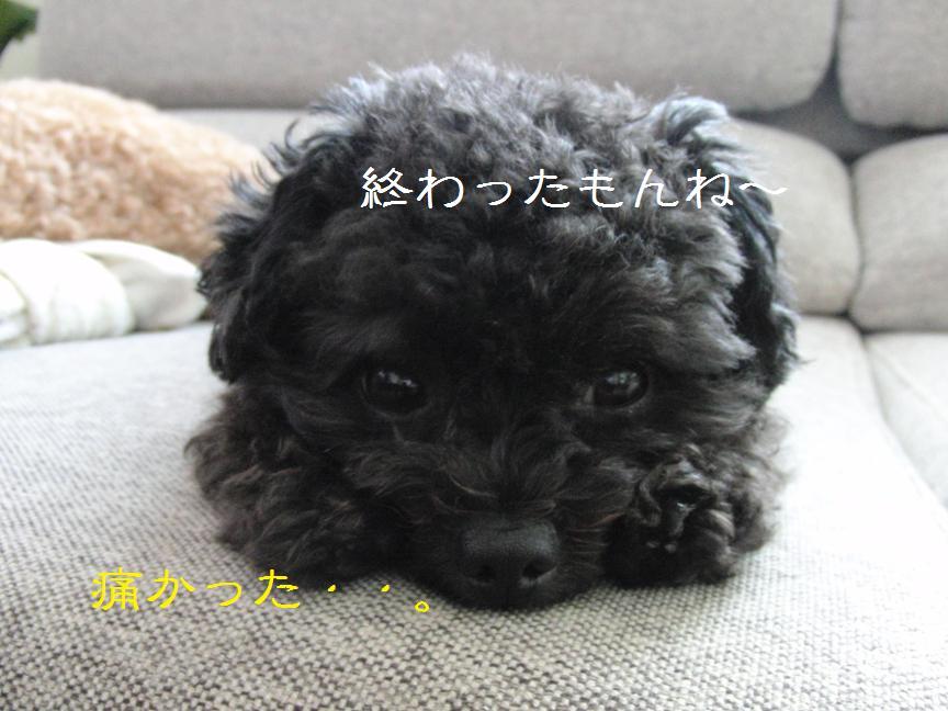004_20110726190305.jpg