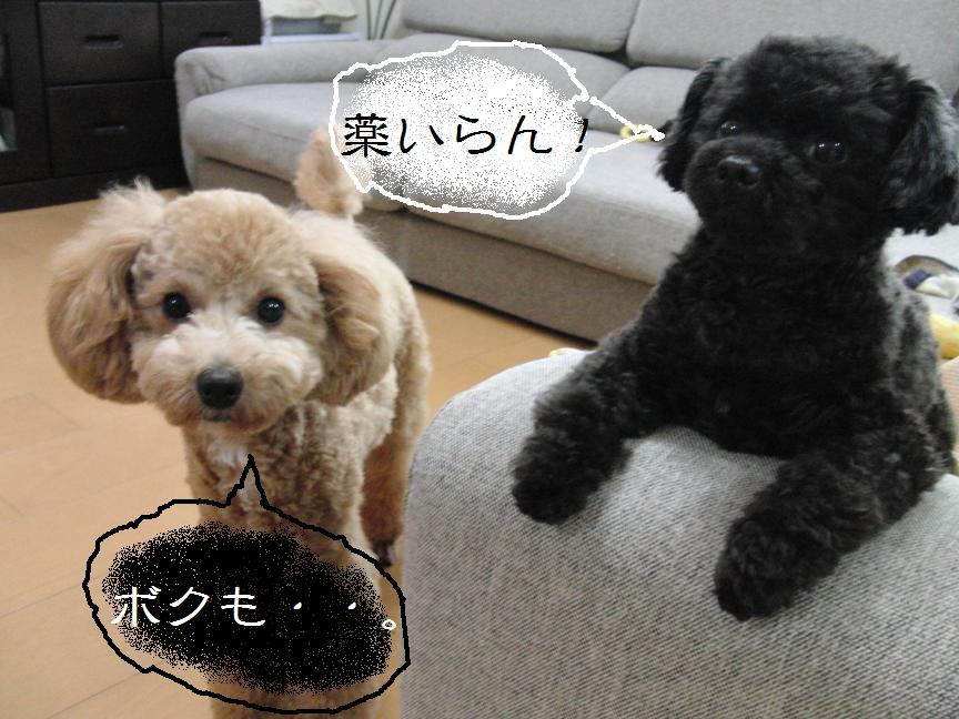 010_20110709232702.jpg