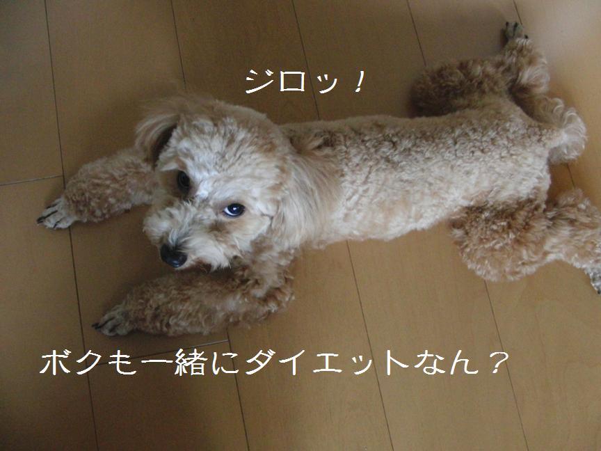 030_20110911115305.jpg