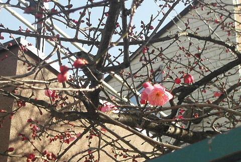 2011_0114森田さん1