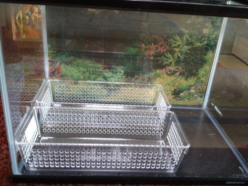 フルイ水槽透明