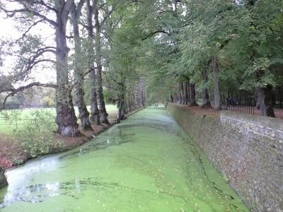 シュノンソー入口近く浮草の川