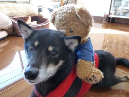 Bon Jovi熊16