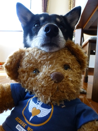 Bon Jovi熊18