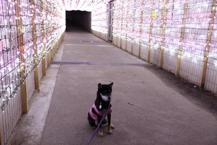 いばらき光の回廊37