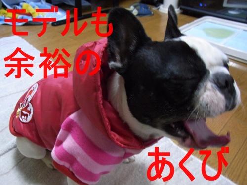 RIMG5771.jpg
