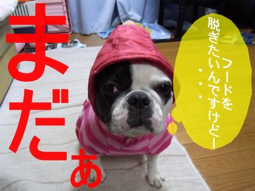 RIMG5773.jpg