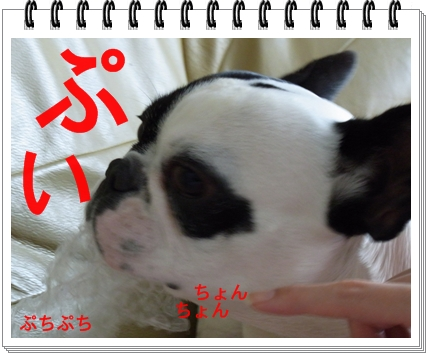 RIMG9203.jpg