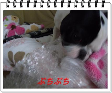 RIMG9248.jpg